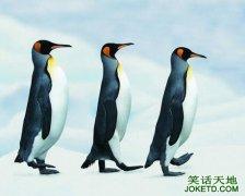 企鹅为什么肚皮白后背黑